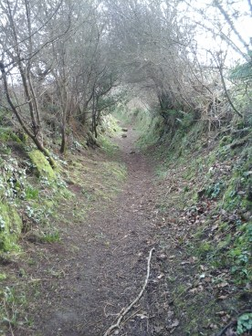 This part of the walk reminded me of LOTR, on the edge of the Shire