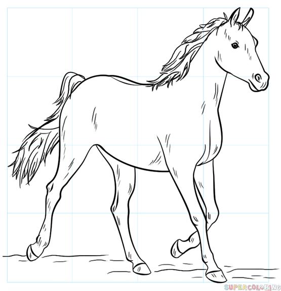 Hoe een paard te tekenen: stiefmeer met een potlood