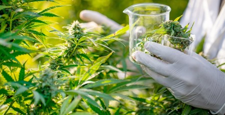 NHS opens up UK's first ever cannabis treatment clinic - The Mandatory Training Group UK -