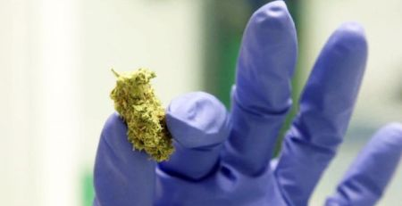 'Hundreds' seek private clinics for medical cannabis - The Mandatory Training Group UK -