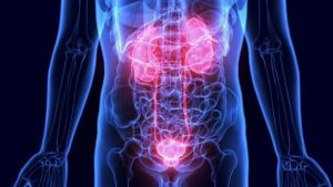 Kidney condition detected in minutes by app 3 -The Mandatory Training Group UK -