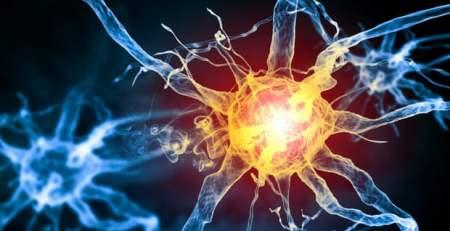 Scientists discover new pain-sensing organ - The Mandatory Training Group UK