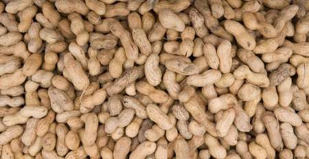 Severe peanut allergy could be beaten by building tolerance - The Mandatory Training Group UK -
