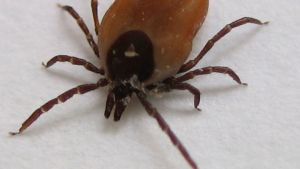 Killer tick-borne brain disease arrives in the UK - The Mandatory Training Group UK -