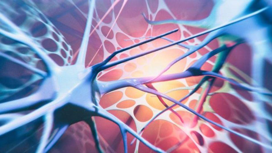 Motor neurone disease 'linked to cholesterol' - BBC NEWS