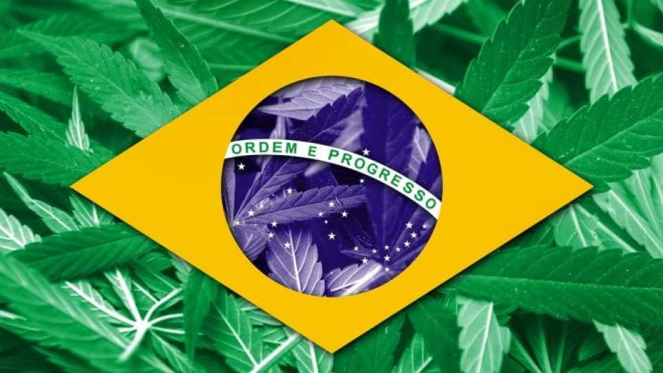 New guidelines approved for medical cannabis in Brazil - MTG UK -