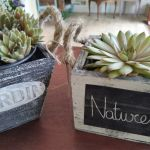 Lovely chic-style succulent plants