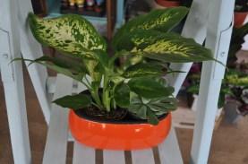 Exclusive ceramic pot - Succulent and house plant