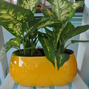 Two house plants - exclusive ceramic pot