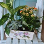 Jardin tin pot - A succulent and two house plants