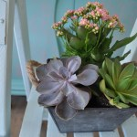 Two succulents in a rustic crate