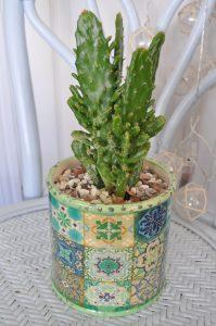 Beautiful Cactus and Mosaic Planter