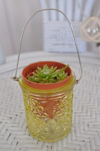 Gorgeous Mini Succulent Planter