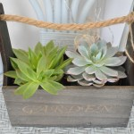 Lovely Garden Planter & Succulent Plants