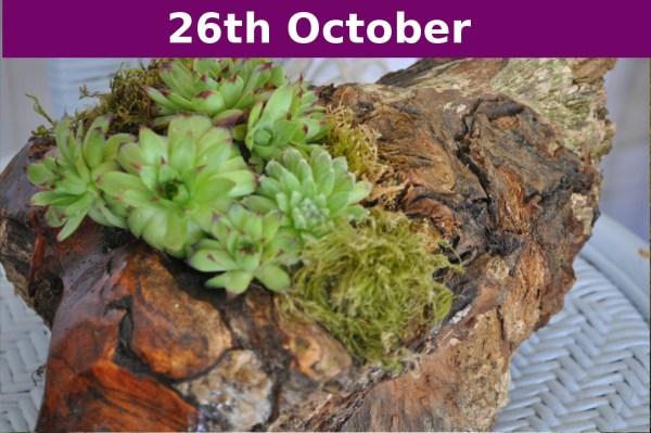 succulent event