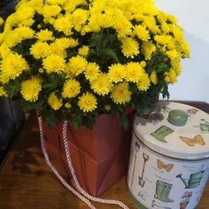Autumn Plant & Shortbread Biscuit Tin