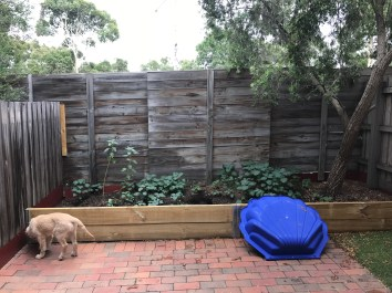 The garden bed, and Milo's shell pool.
