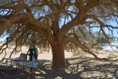 Namibie - mars 2016
