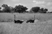 Dinokeng game reserve - Avril 2016