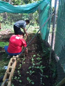 Manu and Solo transplanting vegetable seedlings at our office's nursery