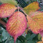 Best autumn garden colours