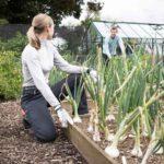 Genus gardening trousers review
