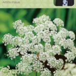 Sarah Raven top cut flower and wildlife seeds