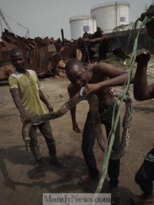 8760183 bado jpegdc658e3c03dac6f89d4acb0c9244feae - Big Snake Terrorizing Kirikiri Residents At Night In Lagos Finally Killed (Photos)