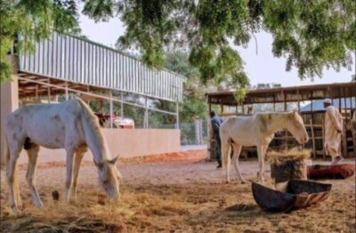 8855025_cc5ffd1cde3a46a180354006992f5c3b_jpeg_jpeg1a5ba9688c1d05601ef467eded45f71e President Buhari Spotted At His Farm In His Hometown Daura, Katsina (Photos)