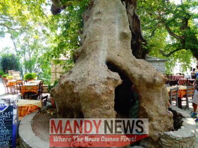 Oldest plane tree in Makrinitsa