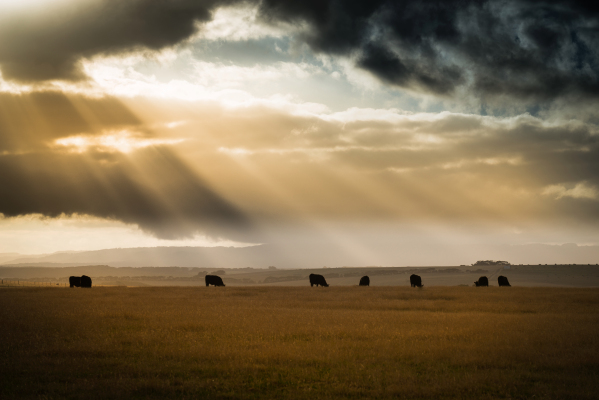 La nueva calculadora climática para el ganado tiene como objetivo ayudar a los ganaderos a reducir las emisiones – TechCrunch