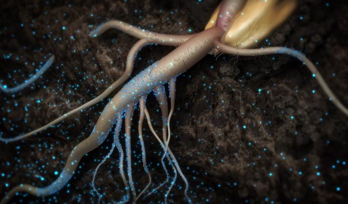 Pivot Bio aporta $ 430 millones en la Ronda D mientras los microbios modificados demuestran su valor en la agricultura – TechCrunch