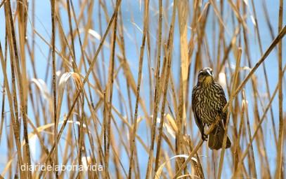 Al voltant del llac trobem diferents aus