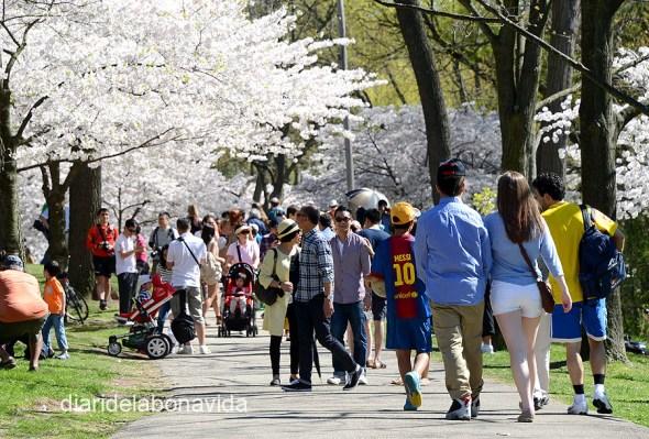 Entre els cirerers trobem un fan de Messi