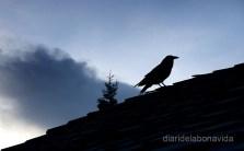 canada3202_rocky_mountains