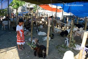indonesia_malang cabras