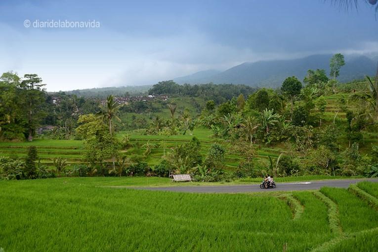 Camps d'arròs a l'illa de Bali