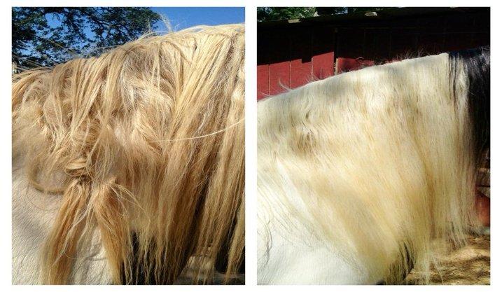 Home Mane Ly Long Hair