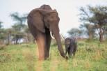 Elefanten Serengeti-2017-1-2