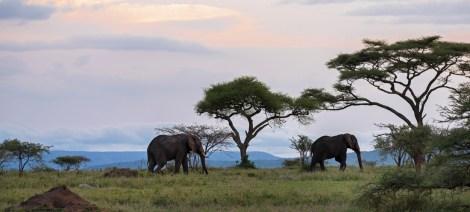 Elefanten Serengeti-feb 2017-11-2