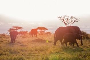 Elefanten Serengeti-feb 2017-12-2