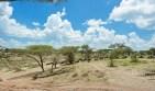 Gnus u Zebras Ndutu-Serengeti gebiet 2017-1-2