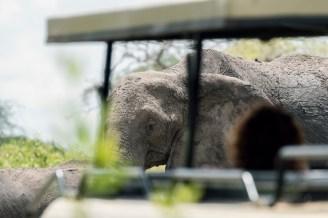 Elefant Tarangirei 2017-2-2