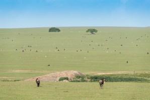 Gnus und Thomson gazellen Ngorongoro-2017-1-2