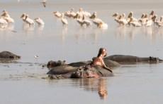 Nilpferde und Pelikane Lake Manjara-2017-1-2