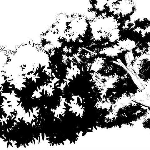 木の葉黒サムネ