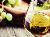 Jak nejlépe podpořit naše vinaře? Přece pitím jejich vína!