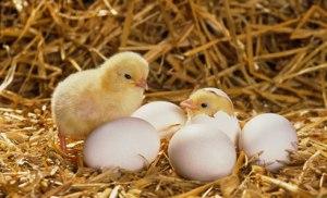 Triết lý quả trứng gà