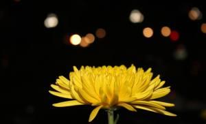 Hoa xuân Tết Ất Mùi ở Quy Nhơn – 2015
