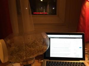 mes graines germées de réserve en pleine rédaction d'article.. :-)